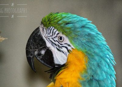 The Macaw Parrot || by AG Fotography