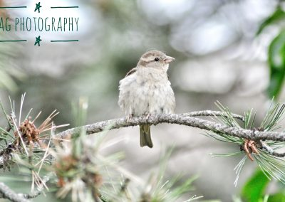 Bird on a Twig Close Up || by AG Fotography