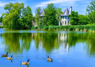 Swans enjoying a fresh pond swim by a Castle || by AG Fotography