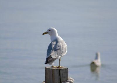 Seagull's got your back || by AG Fotography