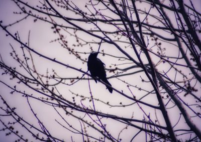 Bird Silhouette on a blooming tree || by AG Fotography